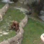 Jokey Joke (Video): Monkey Drinking His Own Pee?