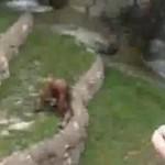 Jokey Joke (Video): Monkey Drinking His Own Pee?
