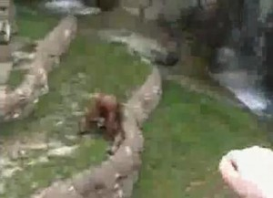 Ape peeing mouth