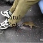 Video: Rat Jumps On Subway Catches Ride on Passenger