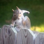 Squirrel Attacks Residents of Vermont Neighborhood