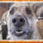 Jokey Joke: Talking Dog, Ice Cream Tricks and Other Crazy Stunts (Video)