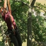 Detroit Produces Young Black Woman Champion Tree Climber (Video)