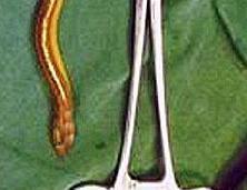 eel&surgical_tool(2011-med-ver-upper)