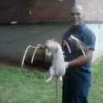 Jay-Z's Marcy Houses Project is Also Home to Mutant Rats