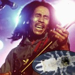 Bob Marley is Inspiration for Name of New Parasite Discovery