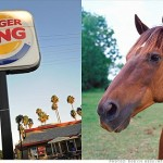 Burger King Finally Admits To Using Horse Meat