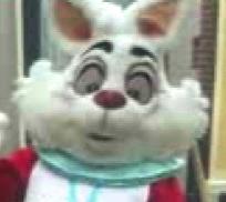 racist-bunny1