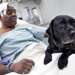 Age Discrimination! 11-Year-Old Guide Dog Forced Into Retirement After Saving Owner