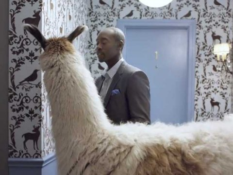 don-cheadle-with-llama-bud-light