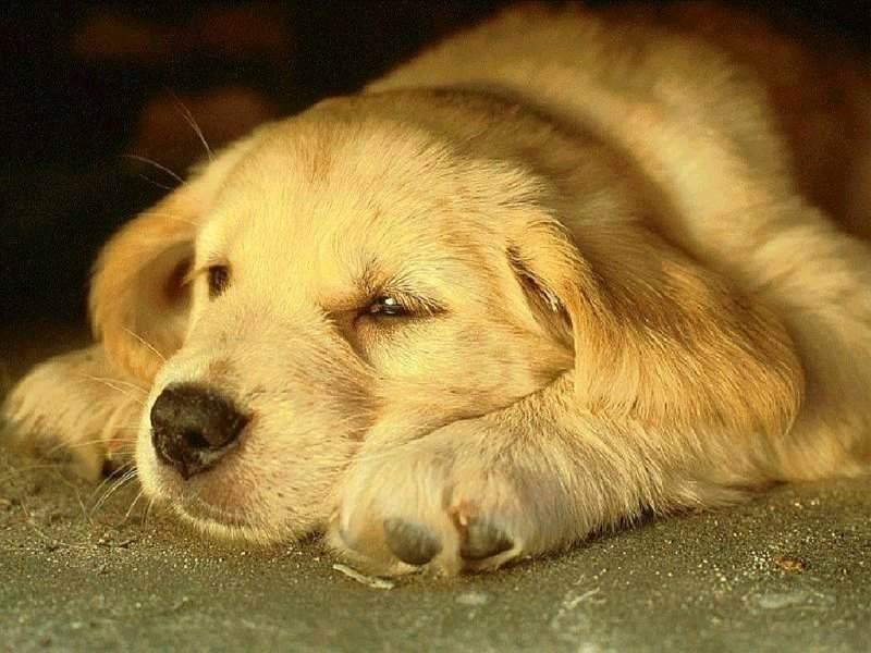 sick-dog-public-domain