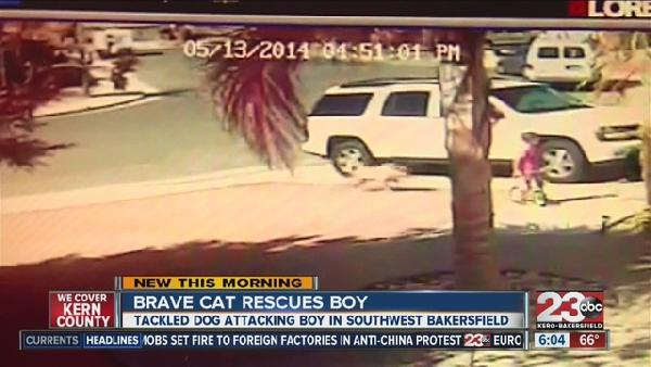 Brave_cat_saves_boy_from_attack_in_Baker_1603800000_4701994_ver1.0_640_480