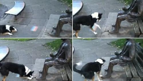 dog wants statue to play
