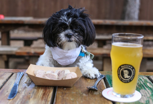 10-restaurants-where-dogs-are-served-steak-beer-and-ice-cream