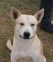 dog who led cops to drug dealer