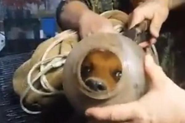 Dog stuck in bucket