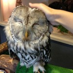 London Opens Bar Where Customers Can Pet Owls (Check Out Over a Dozen Pictures!!)