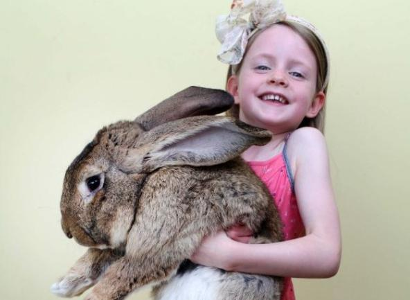 giant rabbit and girl