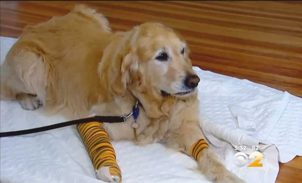 """Witnesses say although """"Figo"""" was hurt, he refused to leave the side of his injured, blind owner."""