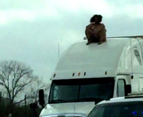 naked woman on truck