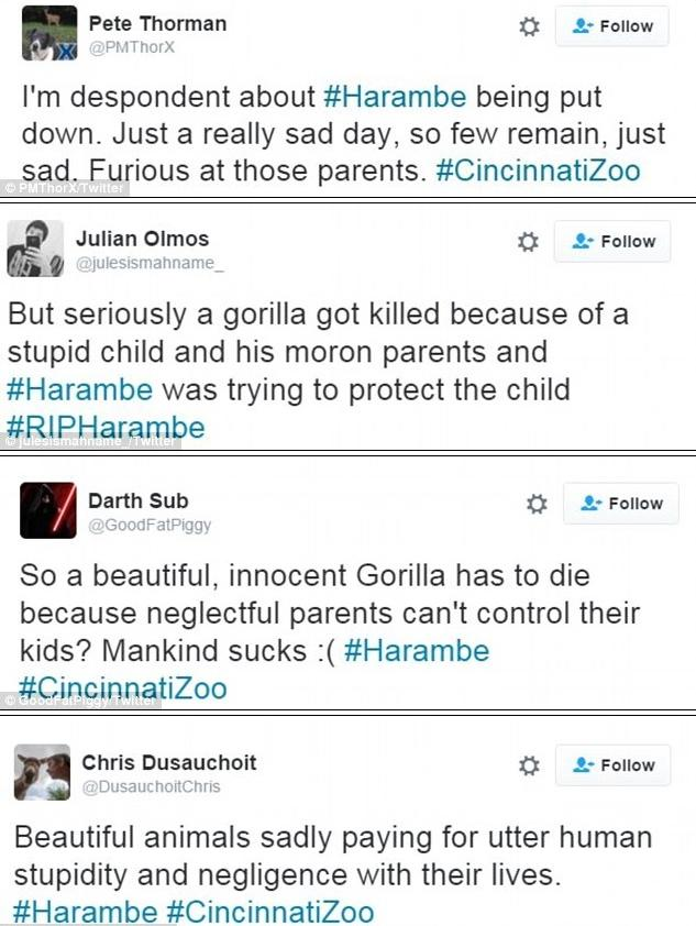 twitter reactions to death of harambe