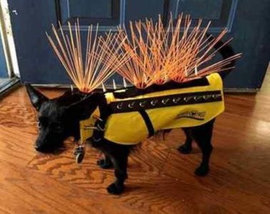 spiked vest for dogs