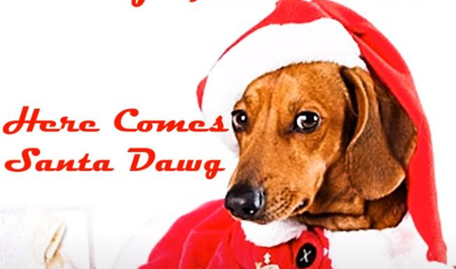 DawgGoneDavis - Here Comes Santa Dawg