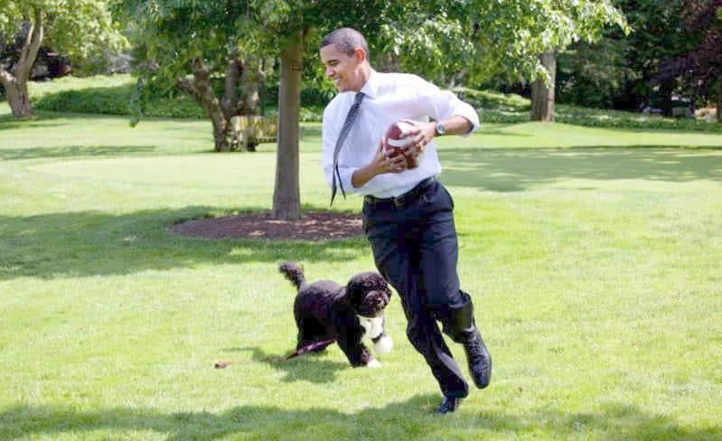 Barack and Bo Obama playing football
